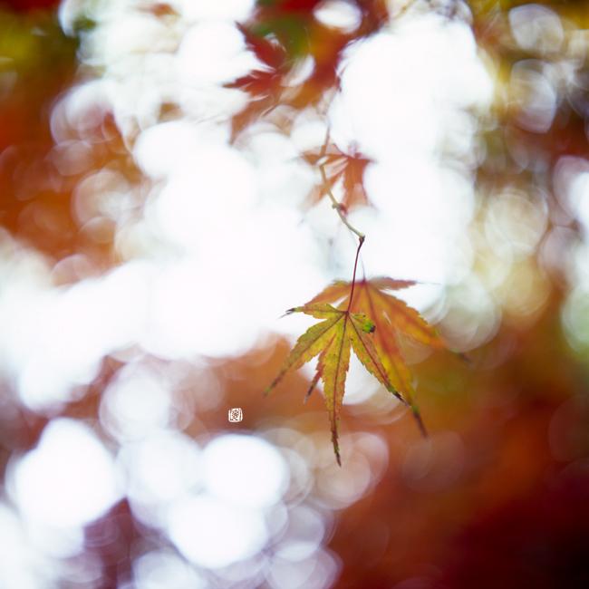 adieu automne